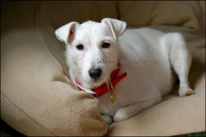 The Real Brian Griffin 1 by KWilliamsPhoto