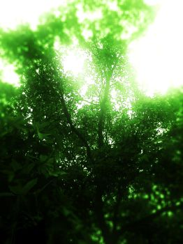 Green Tree by VicPhotography