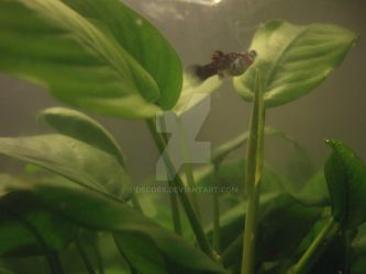 Fishtank - Platy by decors