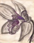 orchid, detailed lip - 1991 by Foozma73