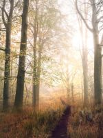 Autumn forest - stock by Consuelo-Parra