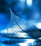 Ice by Floreina-Photography