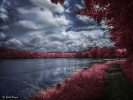 Quiet Contemplation by Leucareth