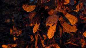 Fall, leaves, fall by subtlescent