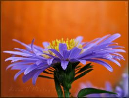 'Flirtatious' by Irena-N-Photography