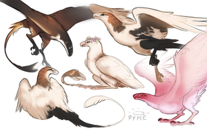 muses by pyme