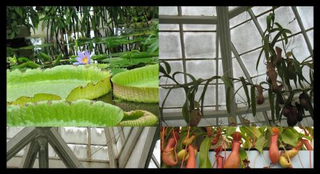 Conservatory of Flowers by RexyisaShark