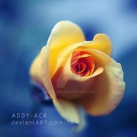 Yellow and blue by addy-ack