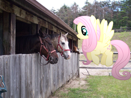 Fluttershy meets real ponies IRL by Pangbot