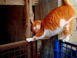 red cat by Amishechka