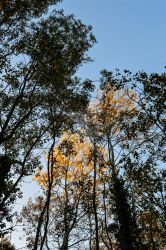 Alcott Wood November Gold 2 by graphic-rusty