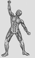 Practicing7: Muscles by mtsfsr
