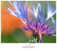 Summertime by signmeupscotty
