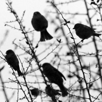 birds by horstklinker