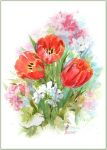 Tulips and geraniums