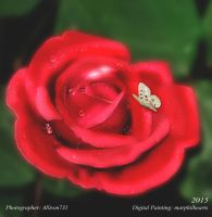 Red Rose by marphilhearts