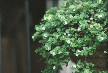 Little White flowers by eGuidry