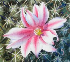 Arizona Fishhook Pincushion Cactus by IvieMoon