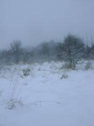 snowy fields -fog- 86 by dark-dragon-stock