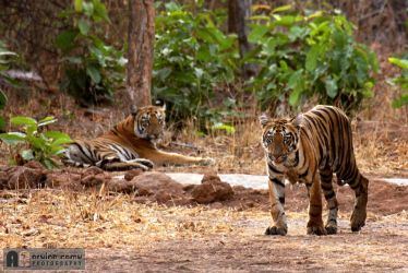 The Royal Walk by Arvind-R