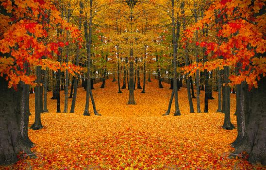 Autumn composition by valiunic
