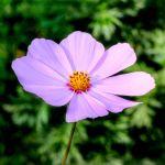 Flower 02 by s-kmp