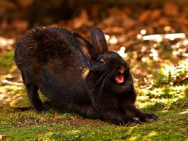 Rabbit's Roar by ecosca