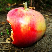 There is a Bug in the Apple by Abrimaal