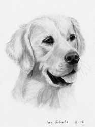 Golden Retriever by shaman-art