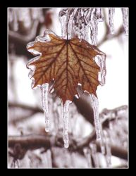 Mild Indiana Frost IV. by octoberrust