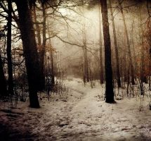 February Forest by Justine1985