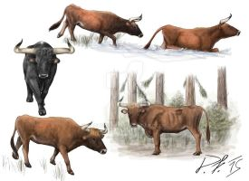Aurochs doing aurochs stuff 2 by Pachyornis