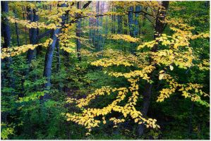 Forest Song by joerossbach