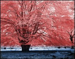 Red Tree infrared... by MichiLauke