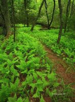 A Walk with the Ferns by TRBPhotographyLLC