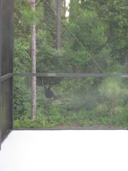 Bear spotted by Holiday Home by kngdmhrts2