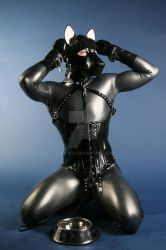 Good Dog by Ange1ica