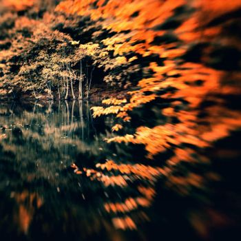 middle of the forest by EbruSidar
