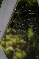 Webs in the Wood by HaleyGottardo