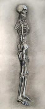 Skeleton charcoal drawing by vytera