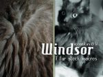 Windsor : Stock by goshdarnart