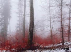 Bloodred Forest XVII by Aenea-Jones