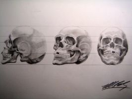 Human Skull in 3 Point Turn by MikeBailey1979