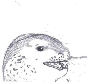 Leopard Seal by Land-Shark17