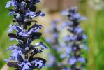 Blue Flowers #1 by beneliphotography