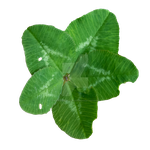 Ultra Lucky Clover PNG by Bunny-with-Camera