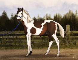 Chub is growing up - Halter by FeatherCandy