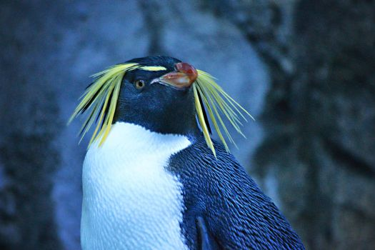 King Penguin by lululoser