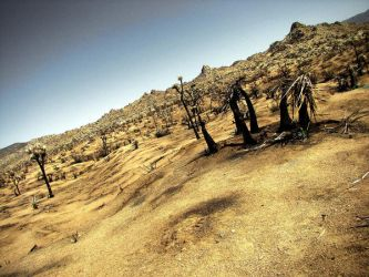 charred landscape. by socaltimes