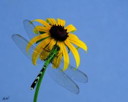 Dragonfly Sky by SteelCowboy